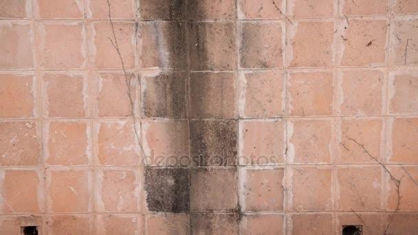 Schimmel Flecken Auf Fliesen Im Freien Wand Stockvideo C Verbaska