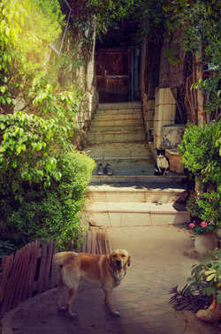 Narrow quiet courtyard with cat and dog