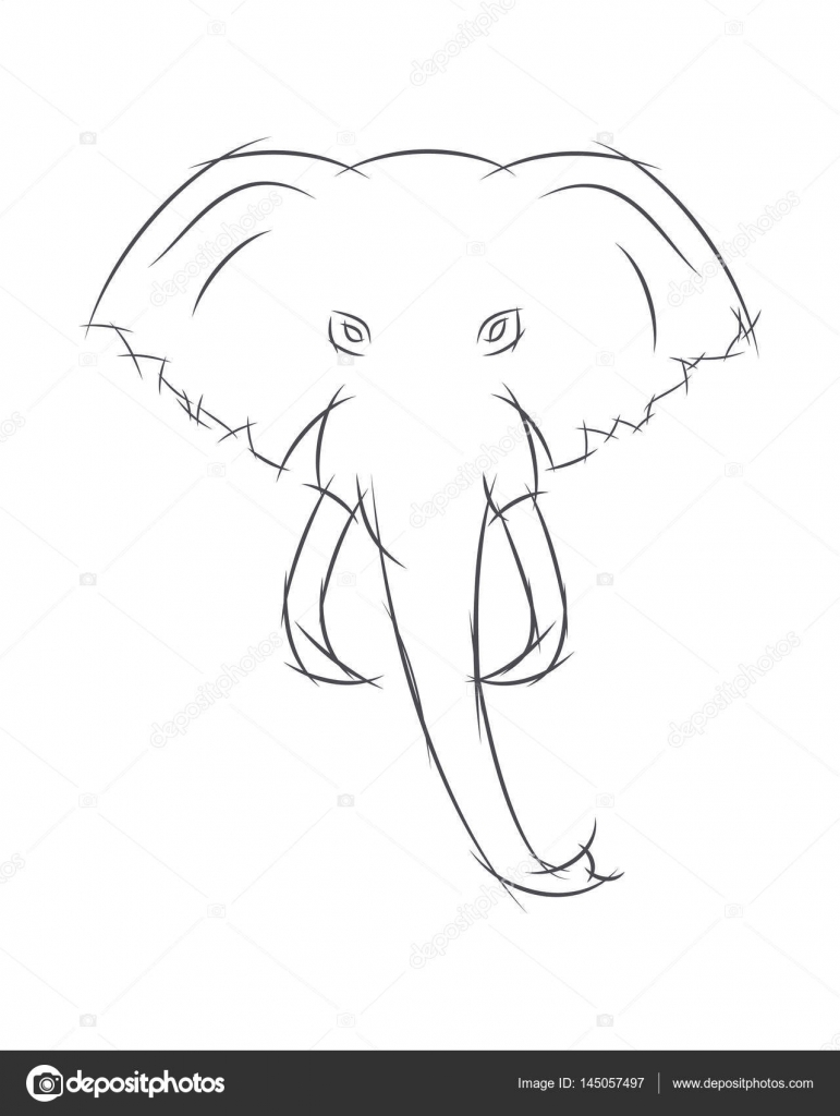 Elephant Front View Drawing Elephant Head Front View This