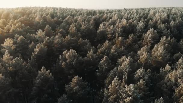 Snowy winter forest during sunrise sun, aerial shot. Cinematic smooth aerial drone shot,winter forest.