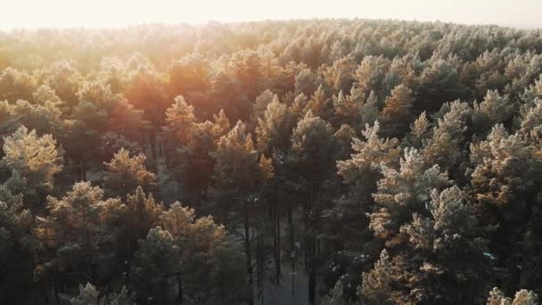 Snowy winter forest during sunset sun, aerial shot. Drone footage flight over winter nature landscape with white trees forest.