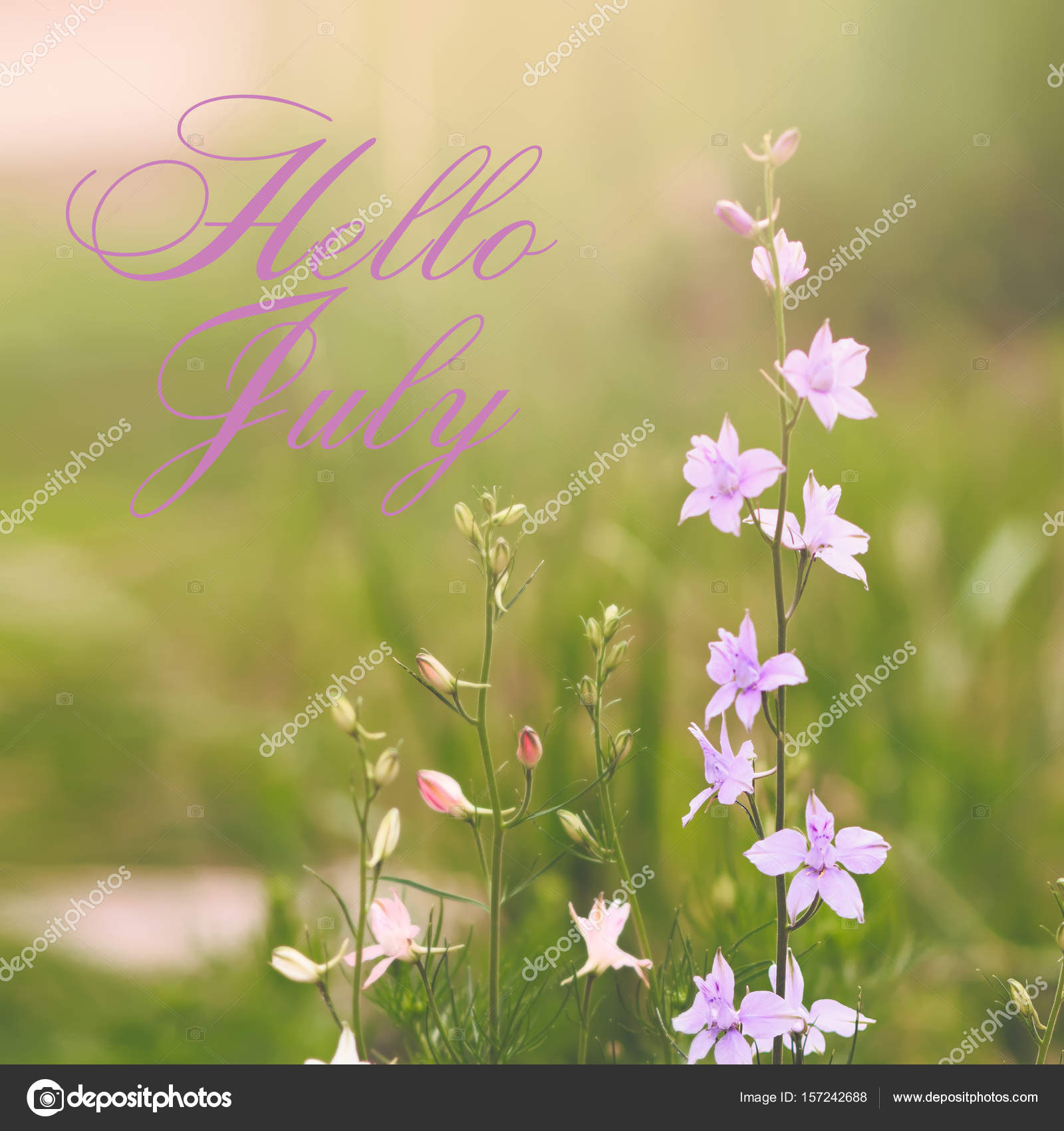 Hello July Greeting Card With Flowers In Background U2014 Stock Photo