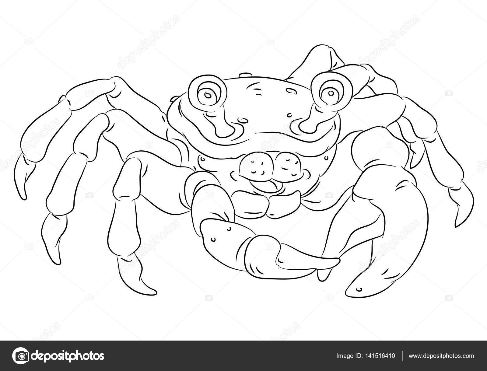 glücklich lächelnd Cartoon Krabbe Malvorlagen — Stockvektor ...