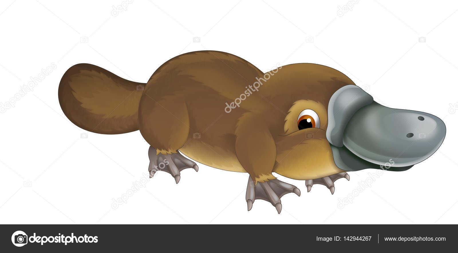 Resultado de imagem para ornitorrinco, imagens