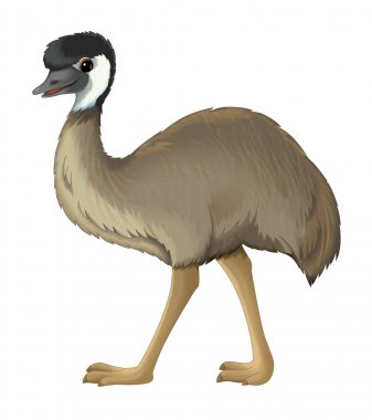 cartoon animal emu walking