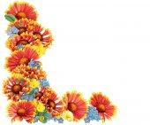 Fotografie oranžové květiny hranice