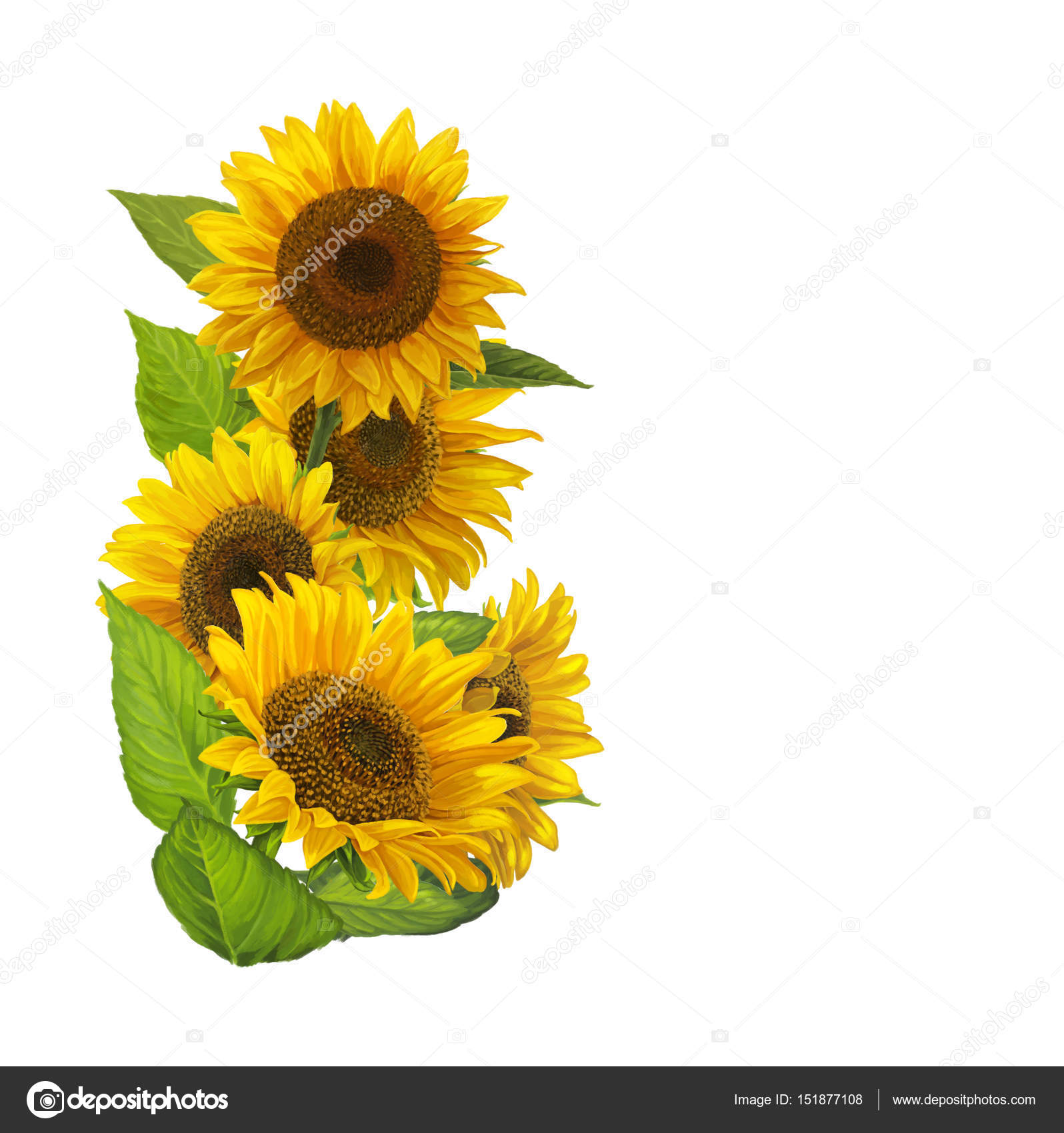 Cartoon Border With Sunflowers On White Background Photo By Agaes8080