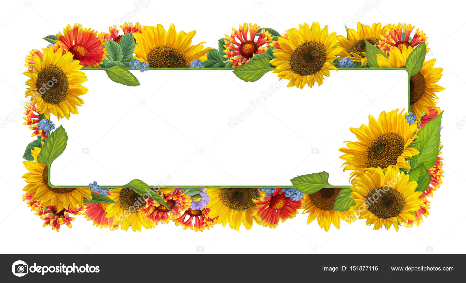 Cartoon Frame With Sunflowers On White Background Photo By Agaes8080