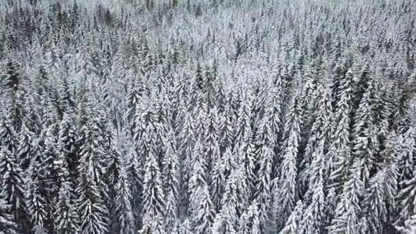 im kalten Winter tief über großen Wald fliegen