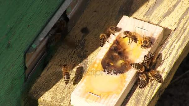 La regina delle api video stock fototravel 164373396 - Nido api finestra ...