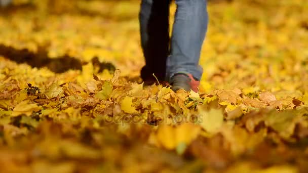 Man walking on a autumn leaves in a Central park