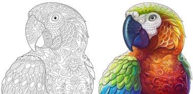 zentangle macaw parrots