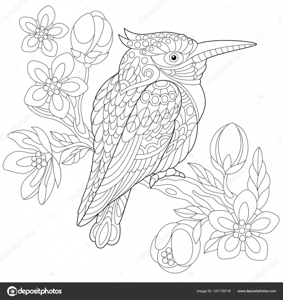 Coloring Page Of Australian Kookaburra Kingfisher Bird Sitting On Cherry Blossoming Tree Branch Freehand Sketch Drawing For Adult Anti Stress
