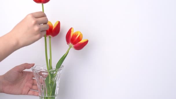 Female florist puts fresh tulip flowers in a glass vase and making floral arrangements at home. Mothers day decorating concept on white clean rustic background, 4K UHD video shot.