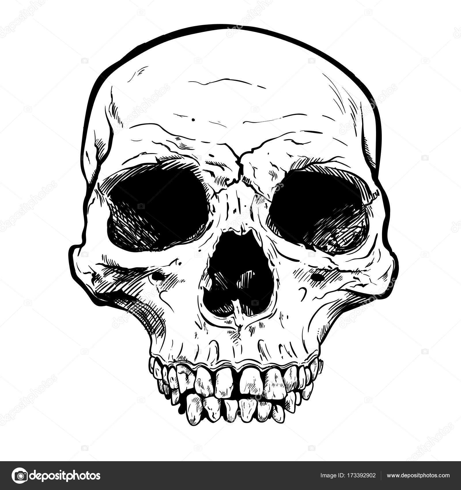 Menschlicher Schädel Vektorgrafiken. Handgezeichnete Abbildung ...