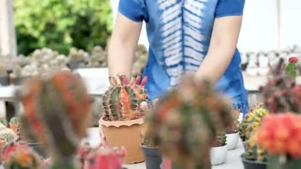 4k: krásné asijské farmář žena výsadbou různých kaktusů v serverové farmě