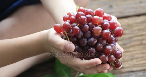 Ruka ukazuje hromadu červených hroznů sklizených sama v červených hroznů vinice. organické potraviny a dobré víno ručně
