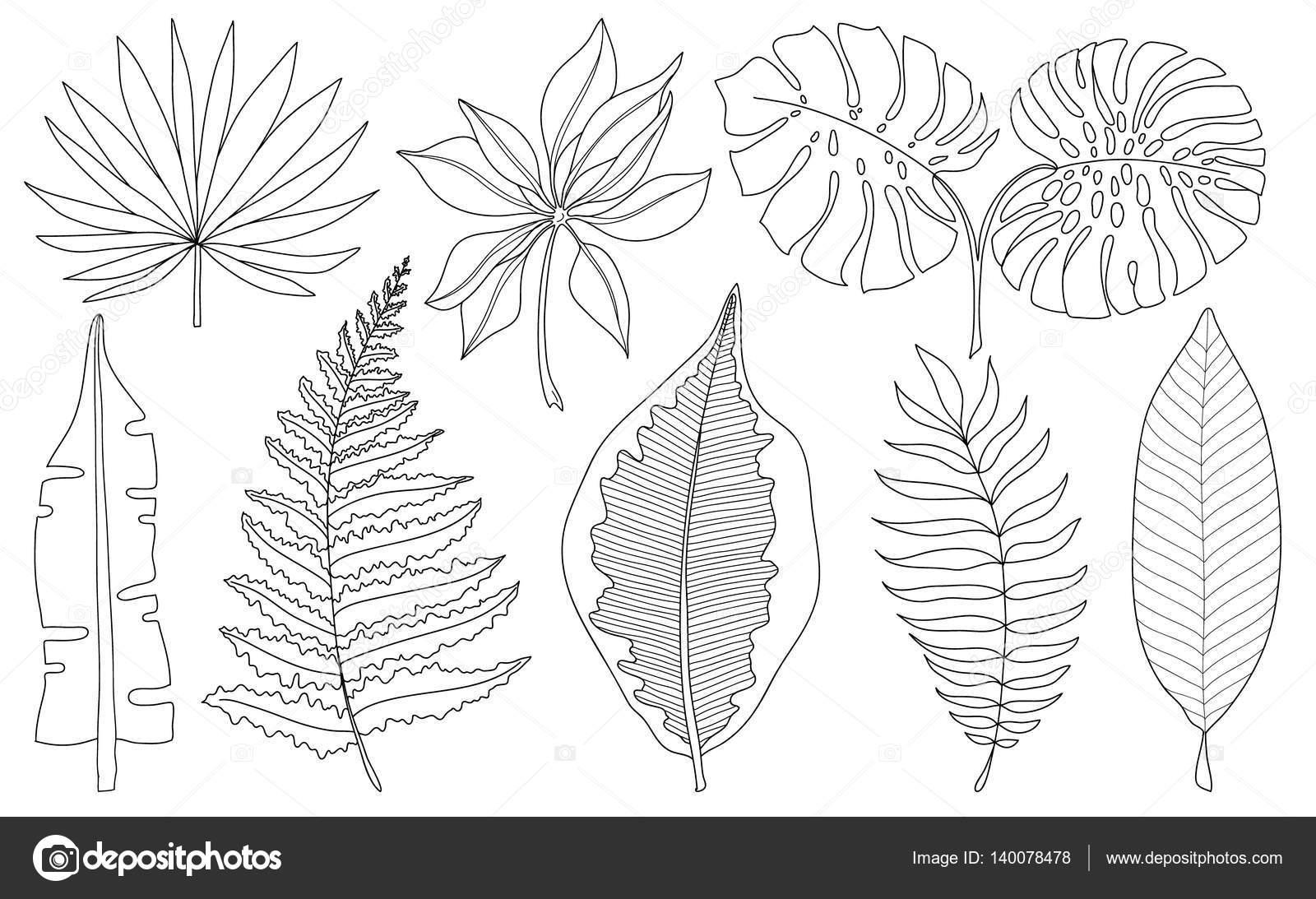 Conjunto de vectores de palmeras tropicales de hojas, negro siluetas ...