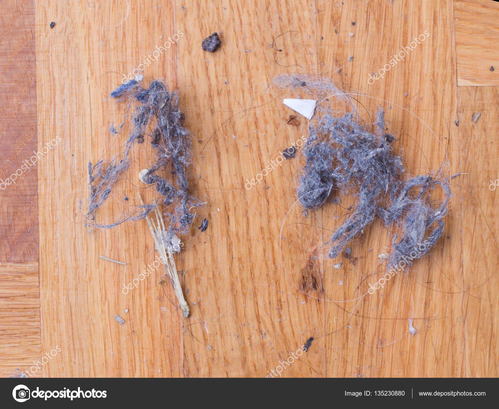 Houten Vloeren Haren : Stof op houten vloer u stockfoto budabar