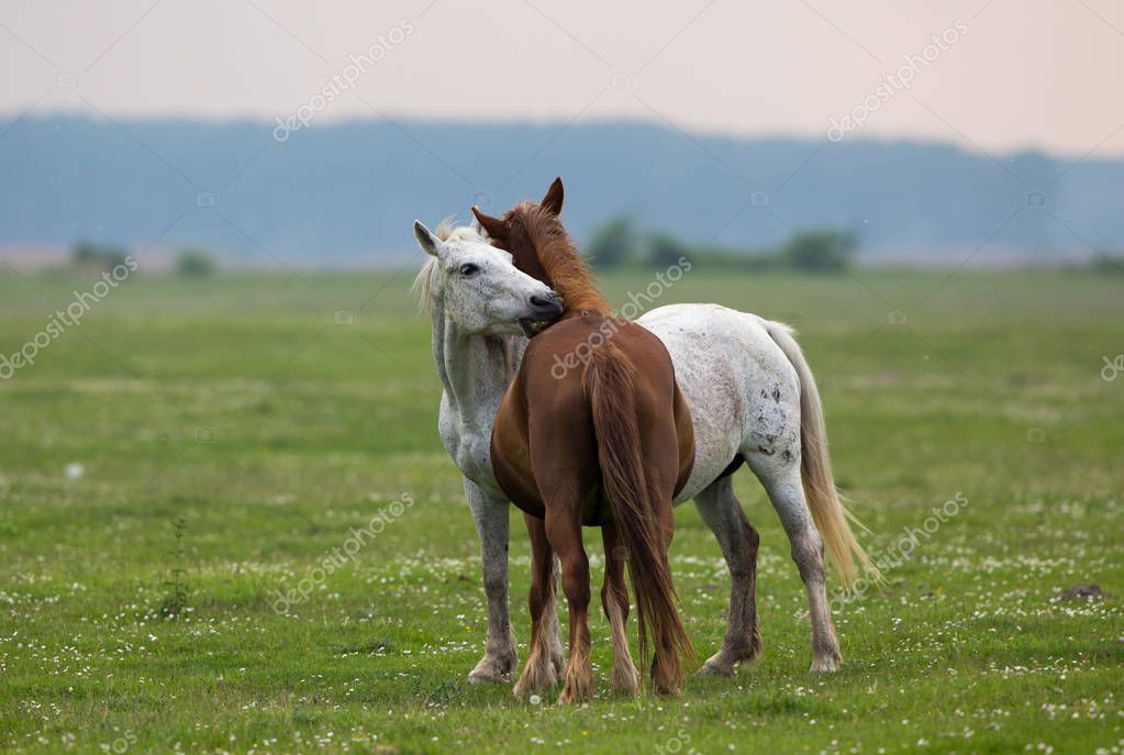 Horse love on meadow