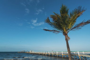 PINE ISLAND, FLORIDA - JAN 17, 2020. Wind whips up palm tree in front of Bokeelia pier.