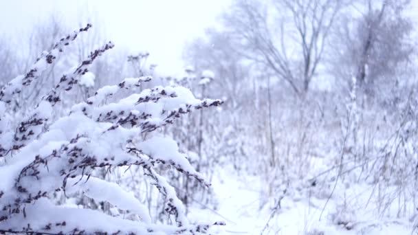 Sníh padá na zaschlou rostlinu na poli poblíž lesa