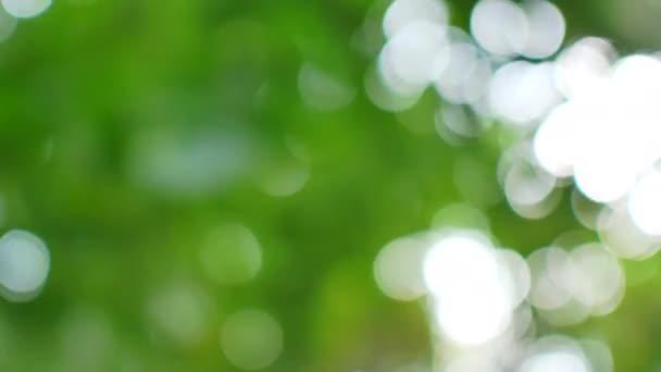 Zelené pozadí bokeh deštných pralesů.