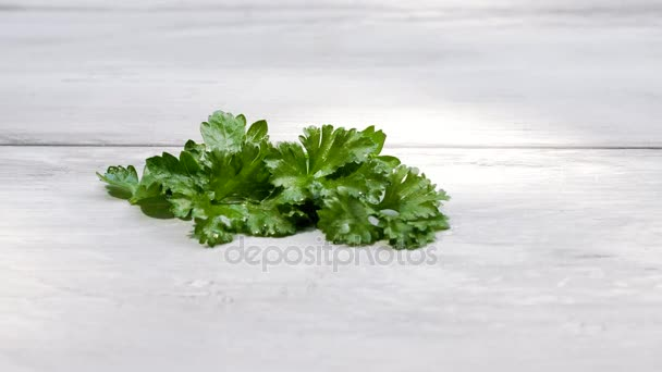 Culinary fresh parsley.