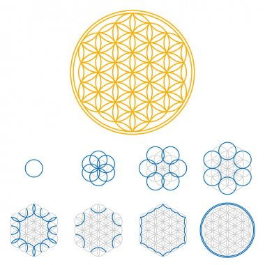 Colored Flower of Life development