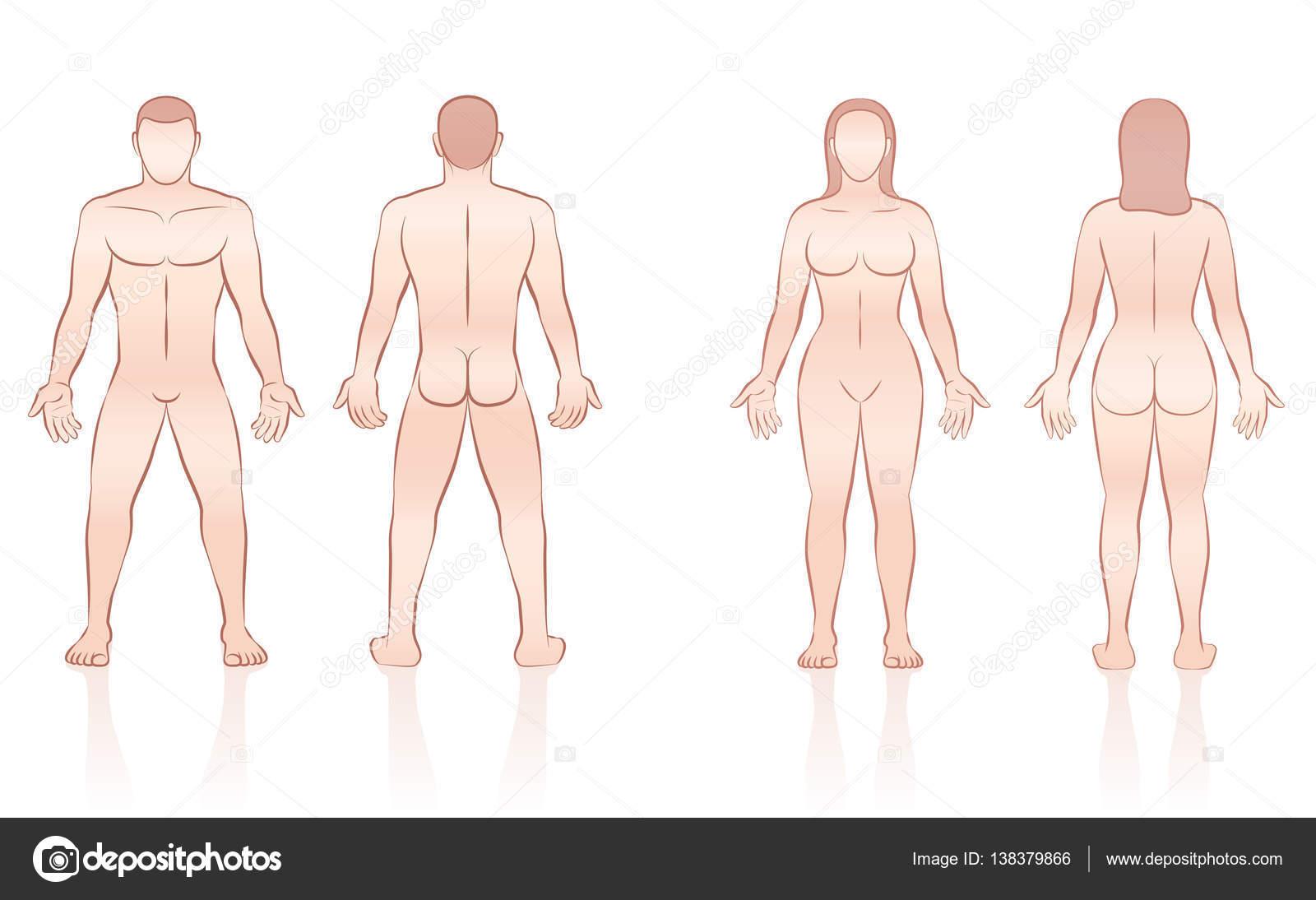 Cuerpo humano hombre mujer delantero espalda — Vector de stock ...