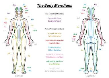 Meridian System Description Chart Female Body