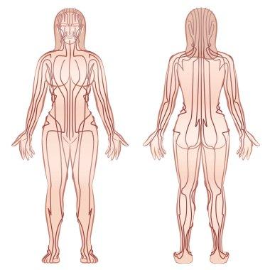 Body Meridians Woman