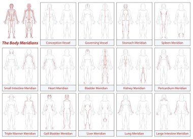 Body Meridians Chart Woman Flow Direction