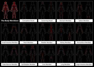 Body Meridians Chart Woman Flow Direction