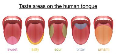 Tongue Sweet Salty Sour Bitter Umami Taste