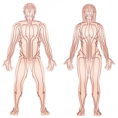 Body Meridians Man Woman Couple