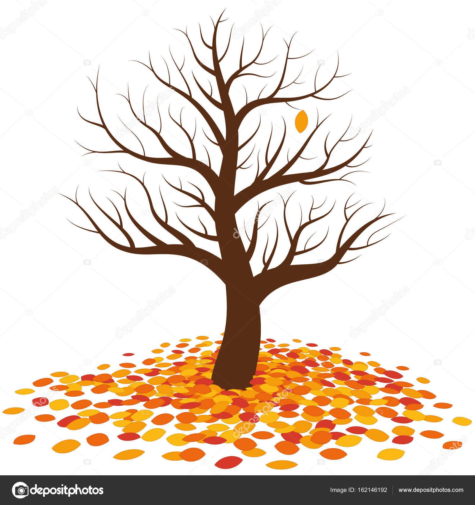 Chute des feuilles d automne arbre sans feuilles image for Arboles de hoja perenne sin fruto