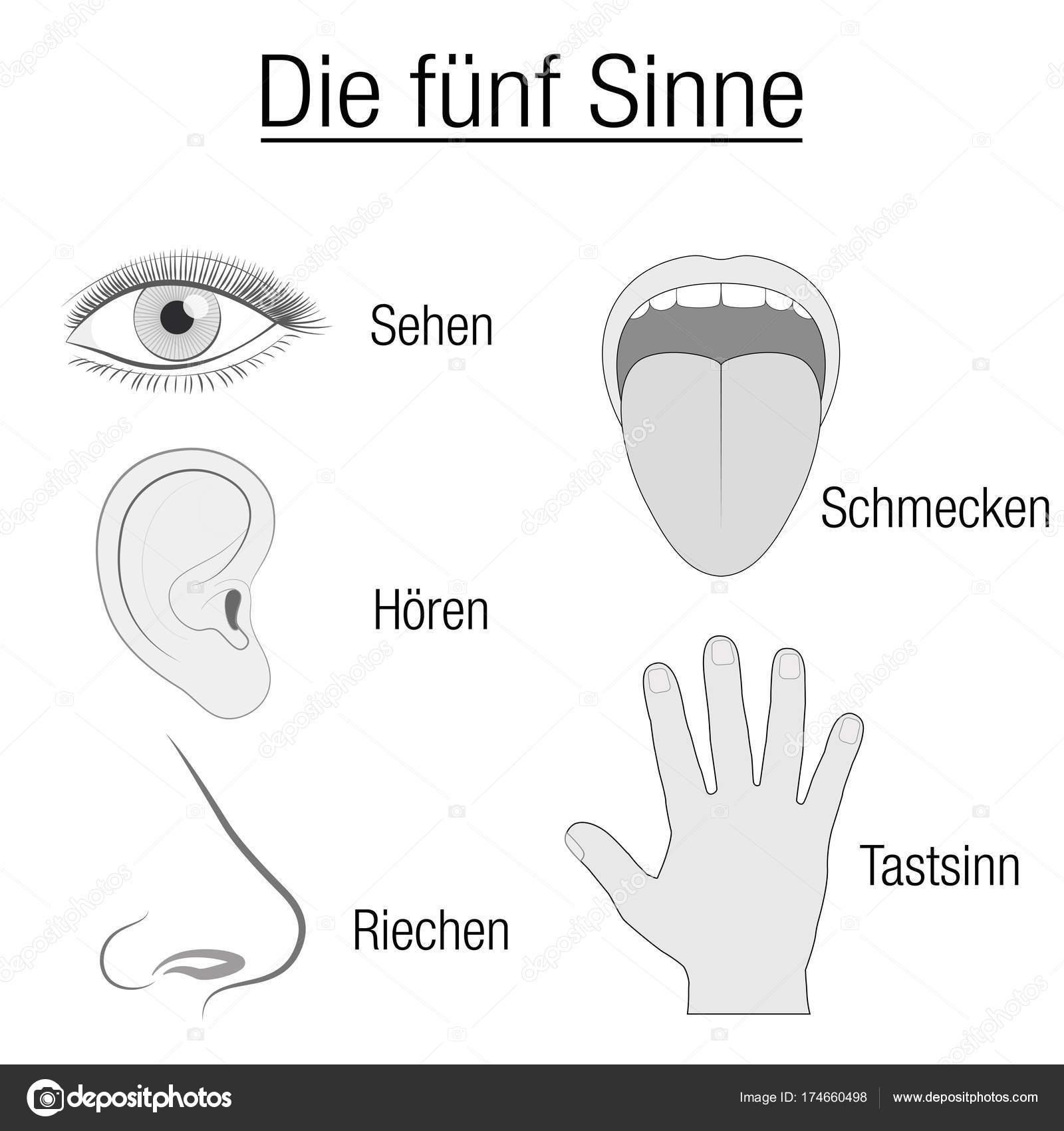 Five Senses Sensory Organs German Chart — Stock Vector © Furian ...