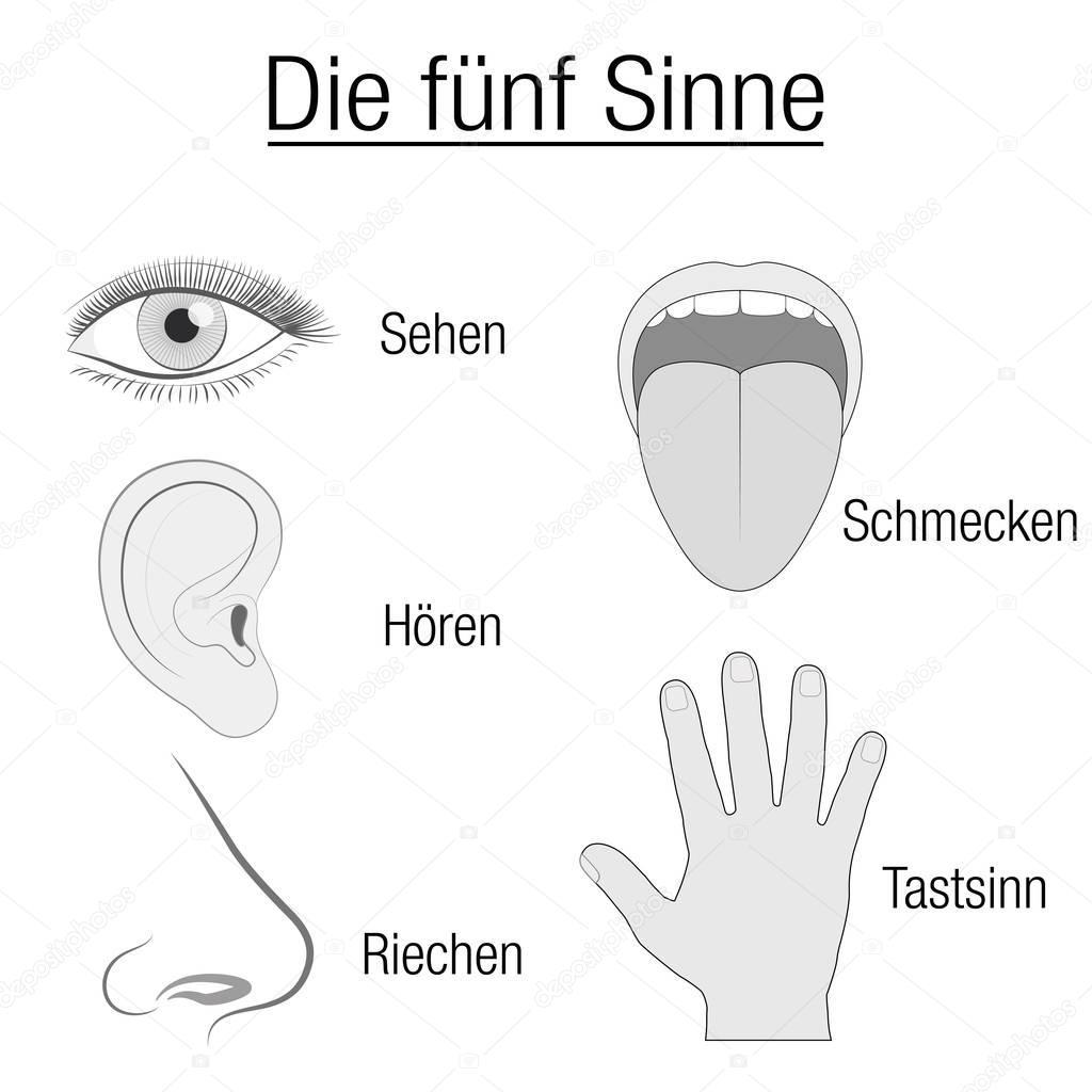 Sentido Deutsch