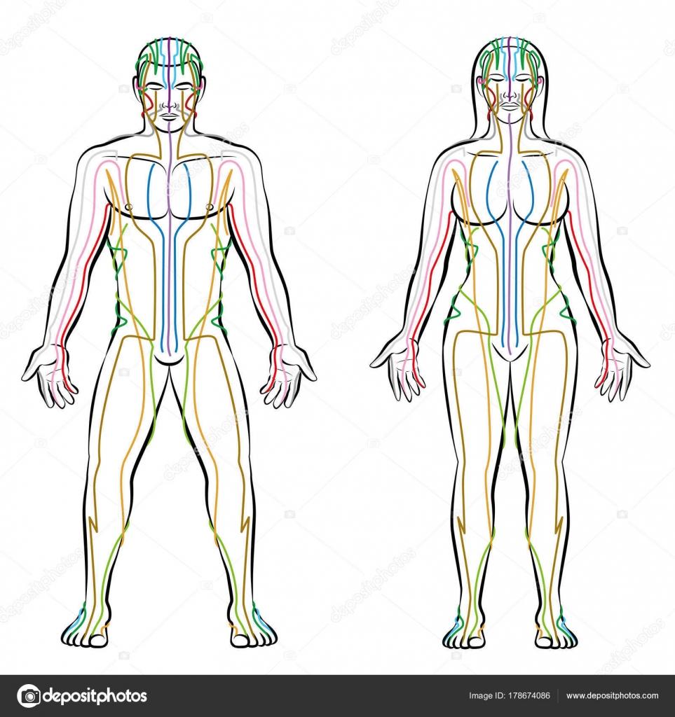Sistema de meridianos cuerpo femenino masculino color meridianos ...