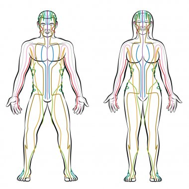 Meridian System Male Female Body Colored Meridians