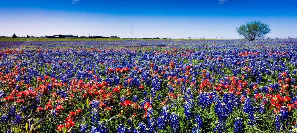 A Wide Angle High Resolution Panoramic View of a Beautiful Field of Wildflowers