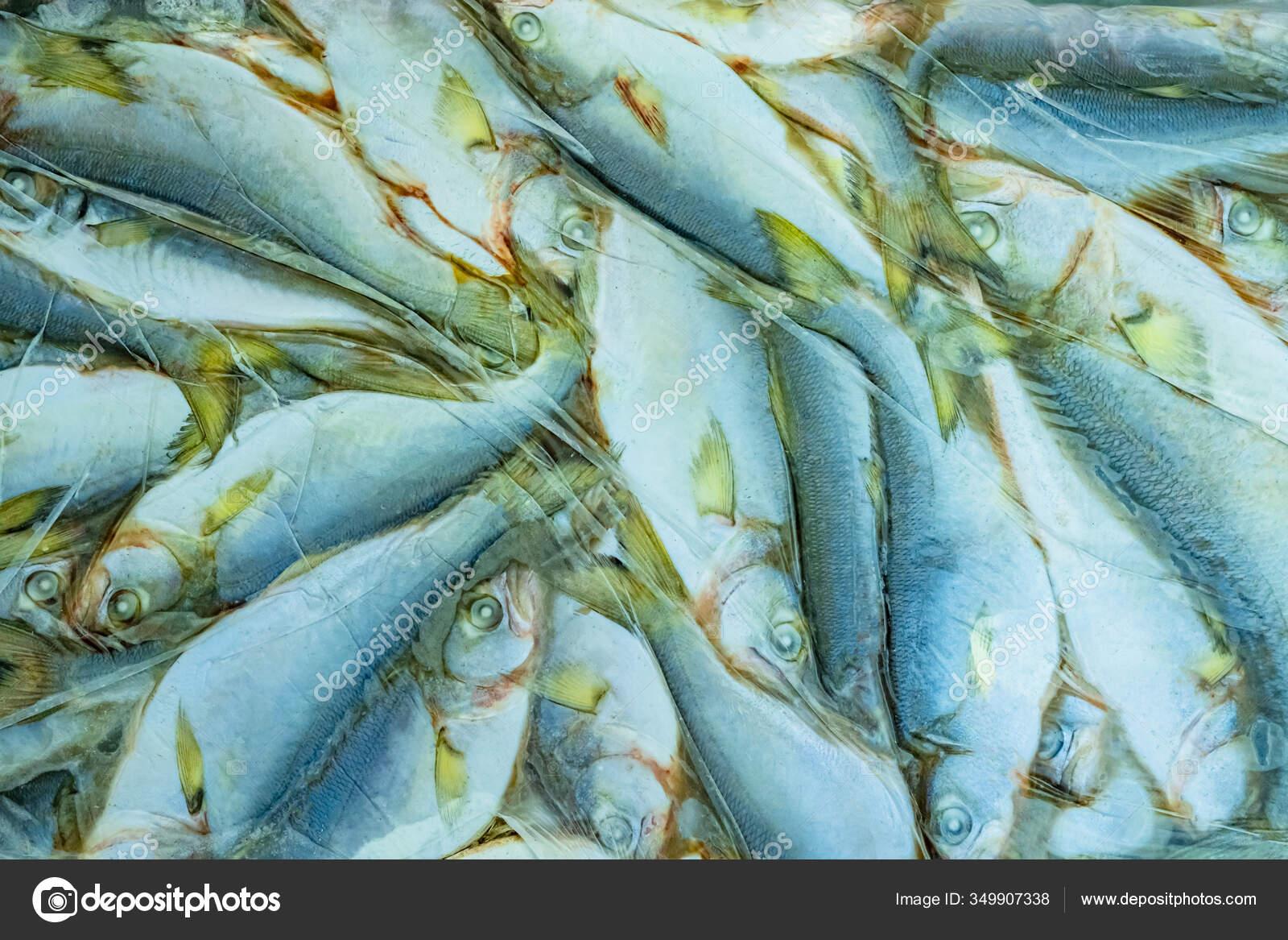 Frozen Fish Briquettes Fast Freezing Fish Sea Long Term Storage Stock Photo C Grinphoto 349907338