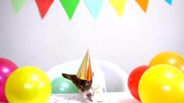 Aranyos kis vicces kutya egy születésnapi torta és egy party kalap ünneplő születésnap
