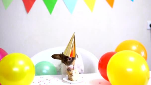 Roztomilý malý zábavný pes s narozeninovým dortem a kloboukem oslavující narozeniny