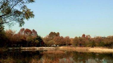 Ducks in beautiful pond