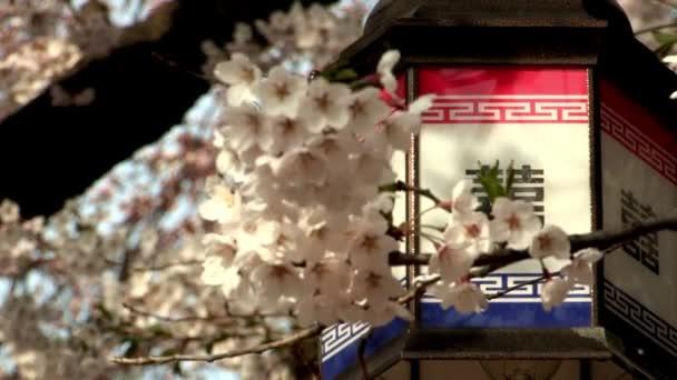 Lampe Poche Sur Arbre Fleurs Seoul Coree Video Tongro C 164178734
