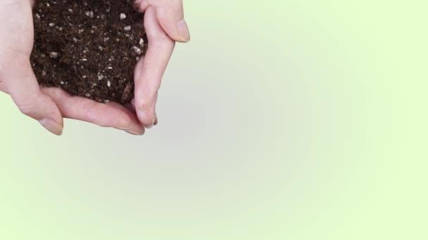 Hände halten Erdhaufen mit wachsender Geldpflanze, Sparkonzept