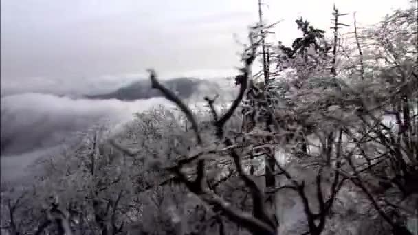 úžasná krajina zasněženém lese v horách na zimní den, Korea