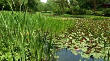 Pond with lotus leaves in Korea Arboretum